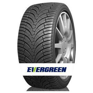Guma Evergreen EU76